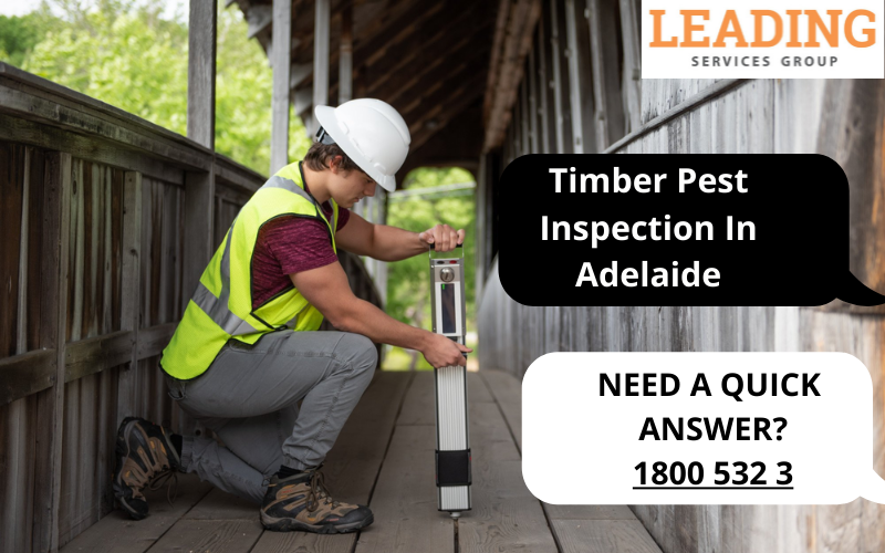 Timber-Pest-Inspection-In-Adelaide